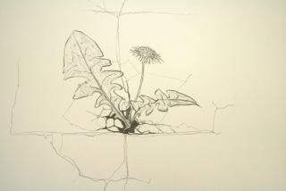 Walk / Drawing